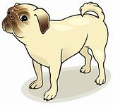 Dog breeds: Pug