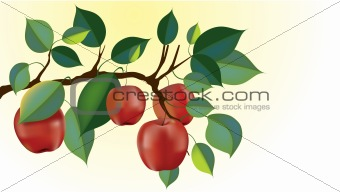 red delicious apple branch vector