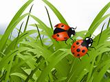 Bright red Lady Bug