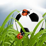 Soccer ball in tall grass with ladybugs