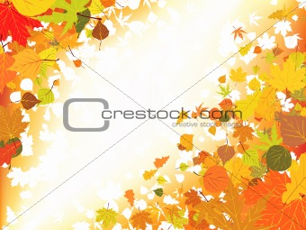 Autumn light background