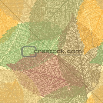 Autumn background 20100919(24).jpg
