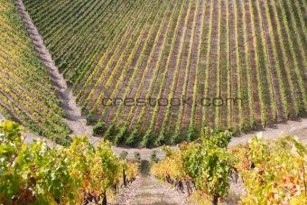 Beautiful Vineyard Landscape
