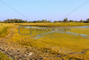 Salt marsh covered with water plants (III)