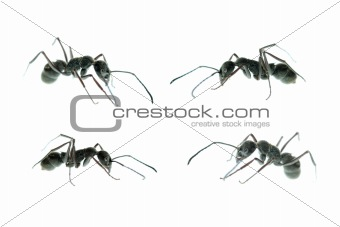 ant side view set