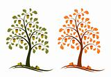 two versions of oak tree