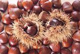 chestnut burs