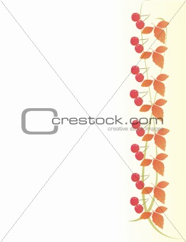 Autumn background with maple leaves and berries