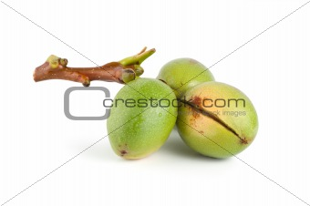 Branch of a walnut isolated