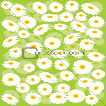 Green background with chamomiles