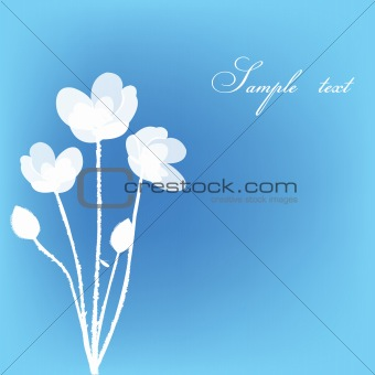 Greeting card with white flowers