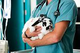 Rabbit at Vet Clinic