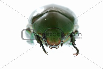 green beetle insect isolated on white