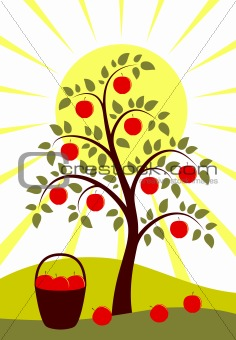 apple tree and sun