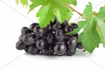 Fresh blue grape isolated