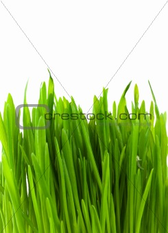 Green pratal grass