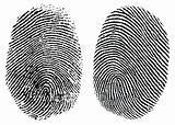 Vector Finger Prints