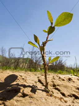 drought land in the fields of catalonia