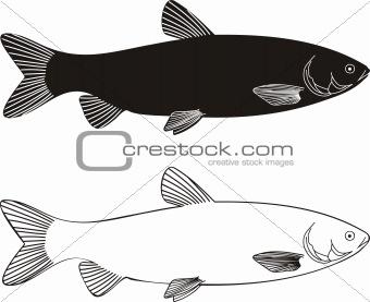 Fish - Grass carp