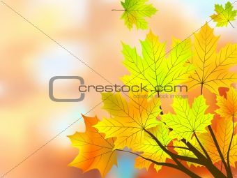 Autumn maple leaves, very shallow focus.