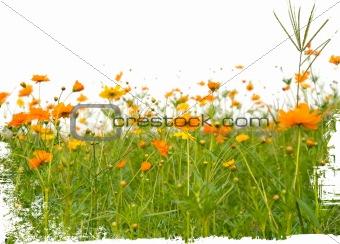 orange flowerss