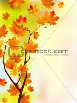 beautiful colors of autumn(29).jpg