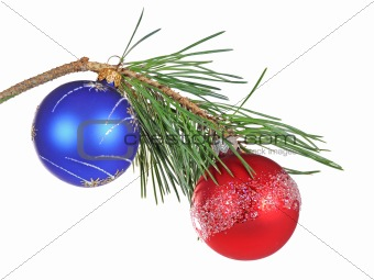 Christmas branch of a pine