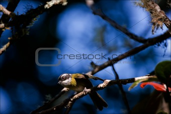 Little bird on a branch.