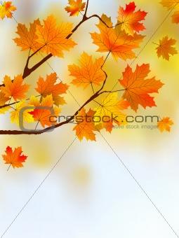 Autumn falling  leafs.
