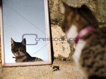 Kitten reflecting on a mirror