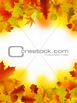Autumn card of bright multicolor leaves.