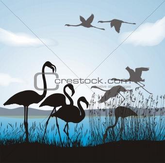 Flamingo on lake shore