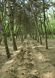 Footpath in spring wood