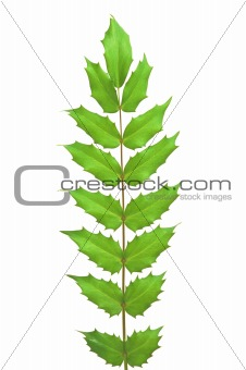 Green spring leaves isolated on white
