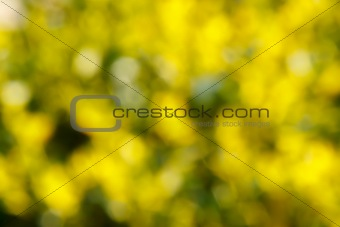 Abstract green and yellow blurred background