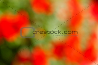 Abstract green and red blurred background