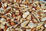 detail of drying autumn mushroom