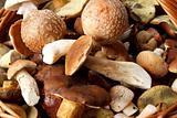 detail of fresh autumn mushroom