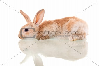 beautiful bunny lying aside