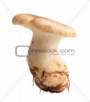 Single fresh mushroom