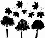 Tree and maple leaves silhouettes