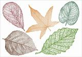 textured autumn leaves, vector
