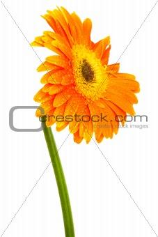 Beautiful orange flower