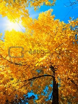bright autumn