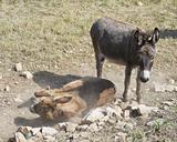 Donkeys.
