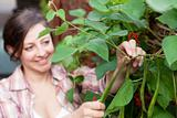 A smiling woman picking runner beans