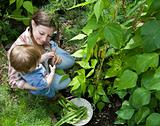 Baby and mother picking beans in the garden