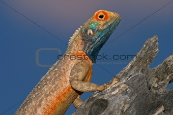 Ground agama