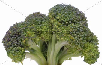 Broccoli closeup looking like a tree