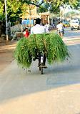 village biker